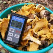 Радиационный контроль грибов